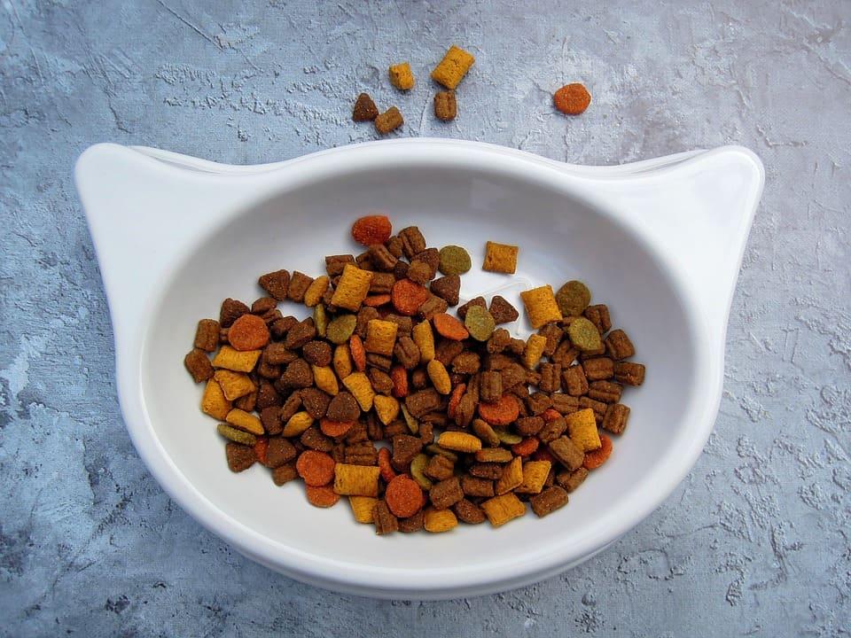 Cara menyimpan makanan kucing basah dan kering