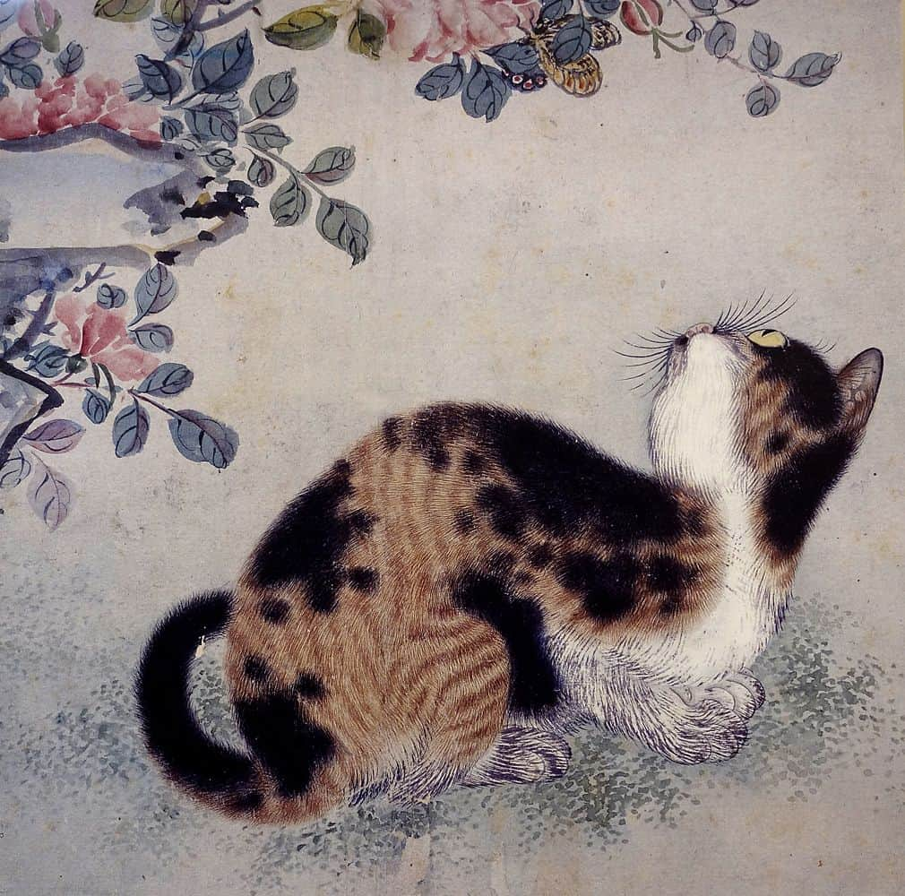 94 Nama Kucing Korea Yang Bagus Beserta Artinya Fanicat