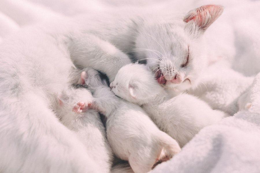 Apakah Anak Kucing Baru Lahir Boleh Dipegang?