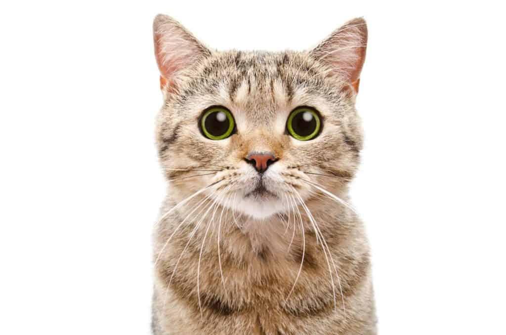 Kucing punya 9 nyawa