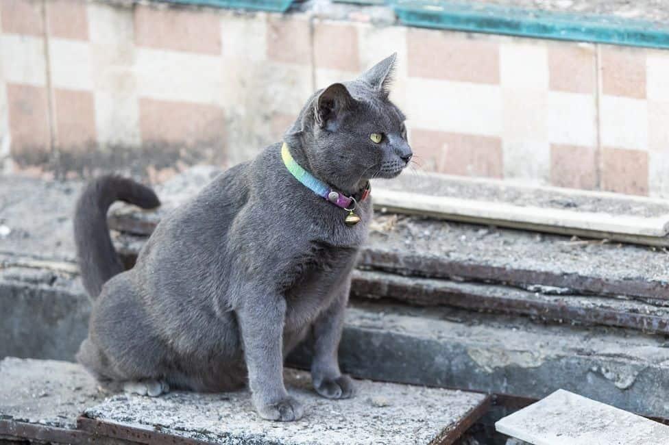 Bahaya kencing kucing