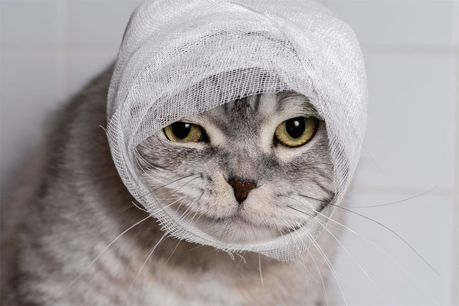 Cara mengobati luka pada kucing