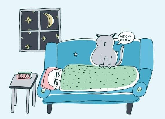 Kucing suka begadang