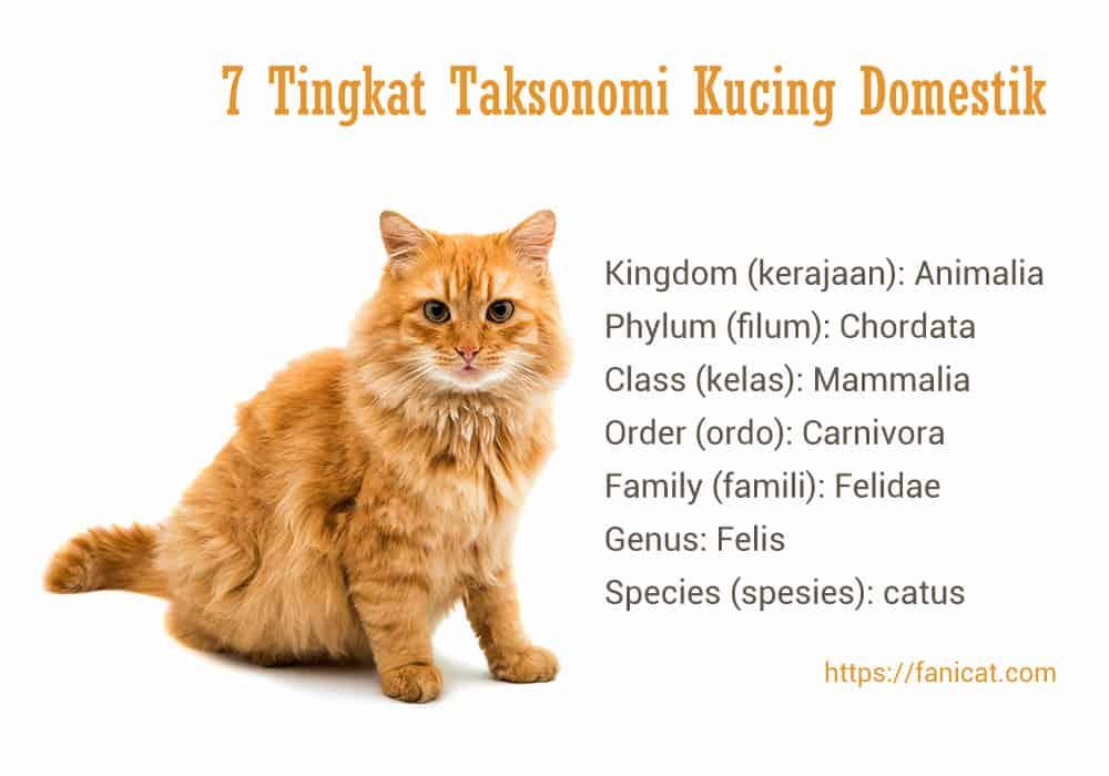 Taksonomi kucing