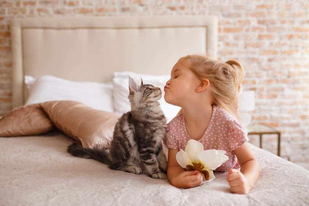 Tanda kucing menyayangi kita
