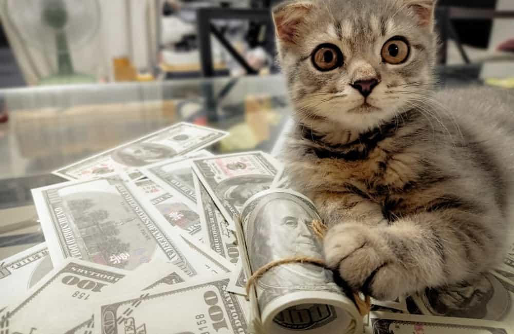 Kucing terkaya di dunia