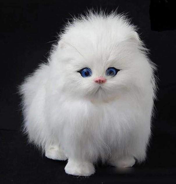 Boneka kucing cute bisa bunyi