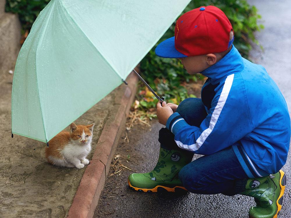 Cara merawat kucing