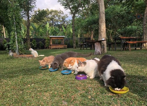 Cats and cafe garden
