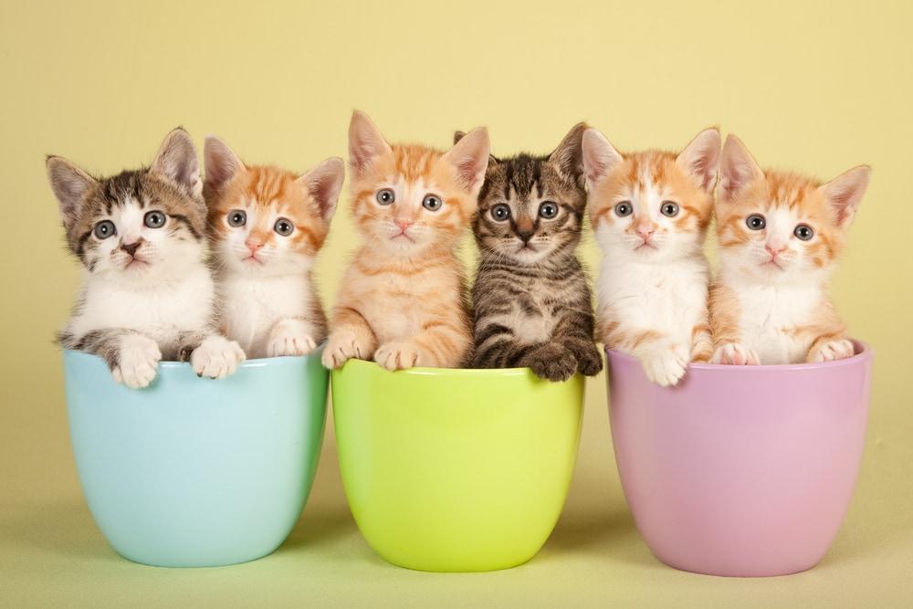 Pertumbuhan anak kucing