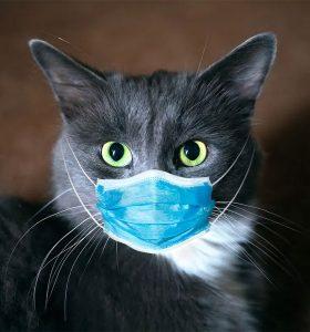 FIP kucing