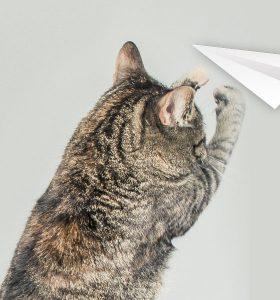 Mainan kucing buatan sendiri