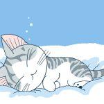 Tips Memilih & Fungsi Underpad Kucing