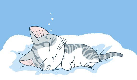 Anime kucing